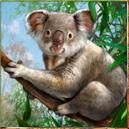 Koala slot